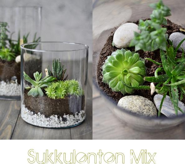 DIY Sukkulenten Terrarium