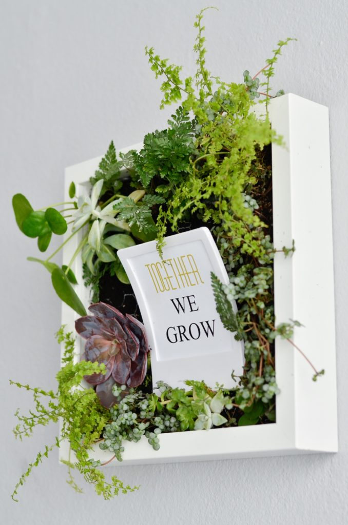 DIY Geschenkidee: Bepflanzter Bilderrahmen