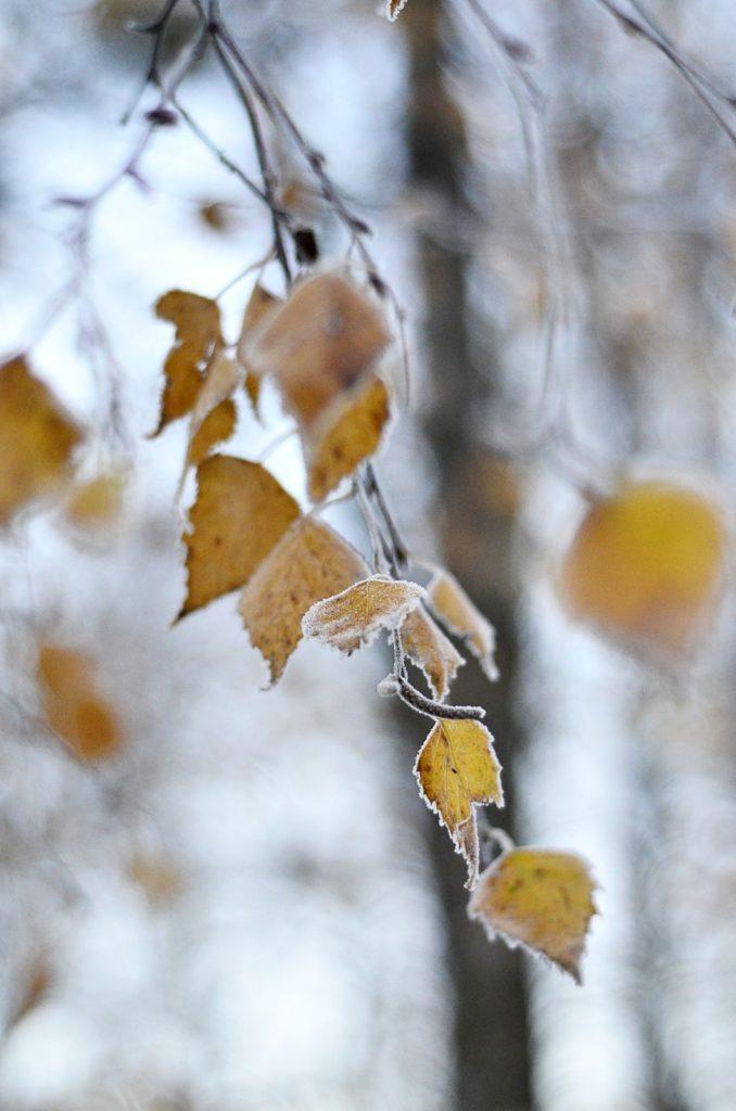Frost im November