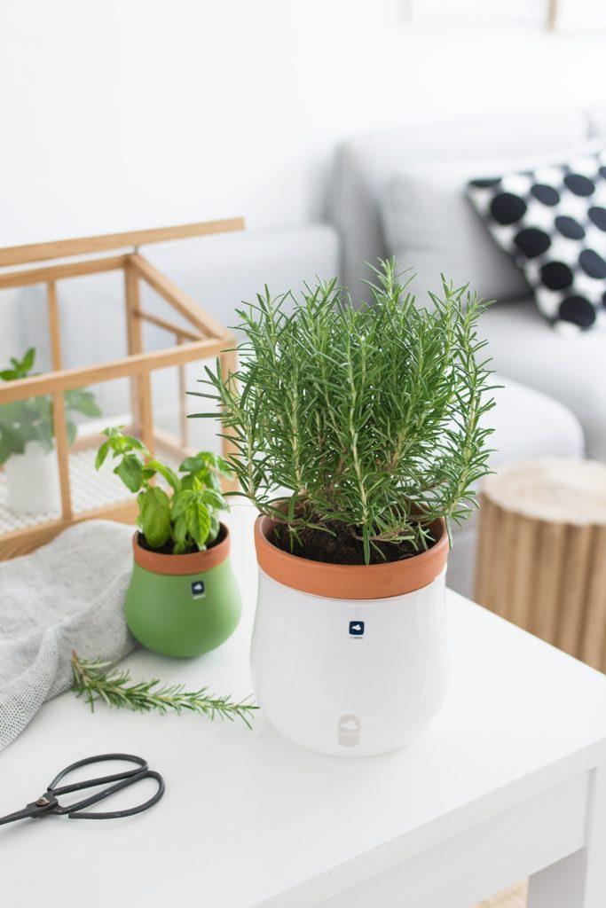 Einfaches Bewässerungssystem für Kräuter + Basilikum selbst ...