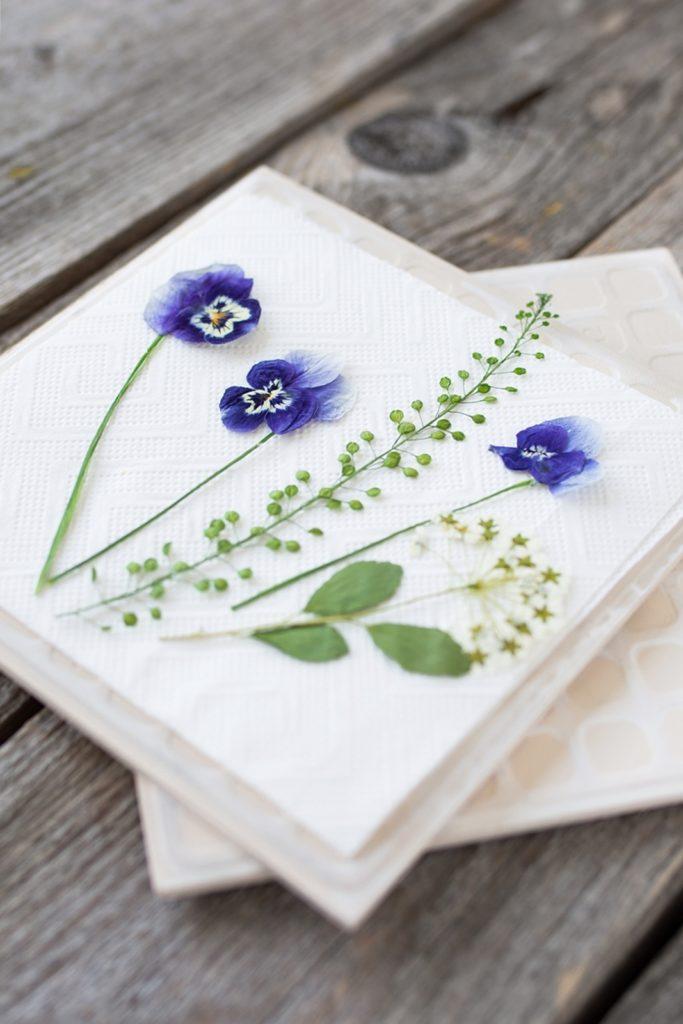 Blumen Trocknen Ohne Farbverlust : so trocknest du einfach und schnell blumen in 2 minuten ~ A.2002-acura-tl-radio.info Haus und Dekorationen