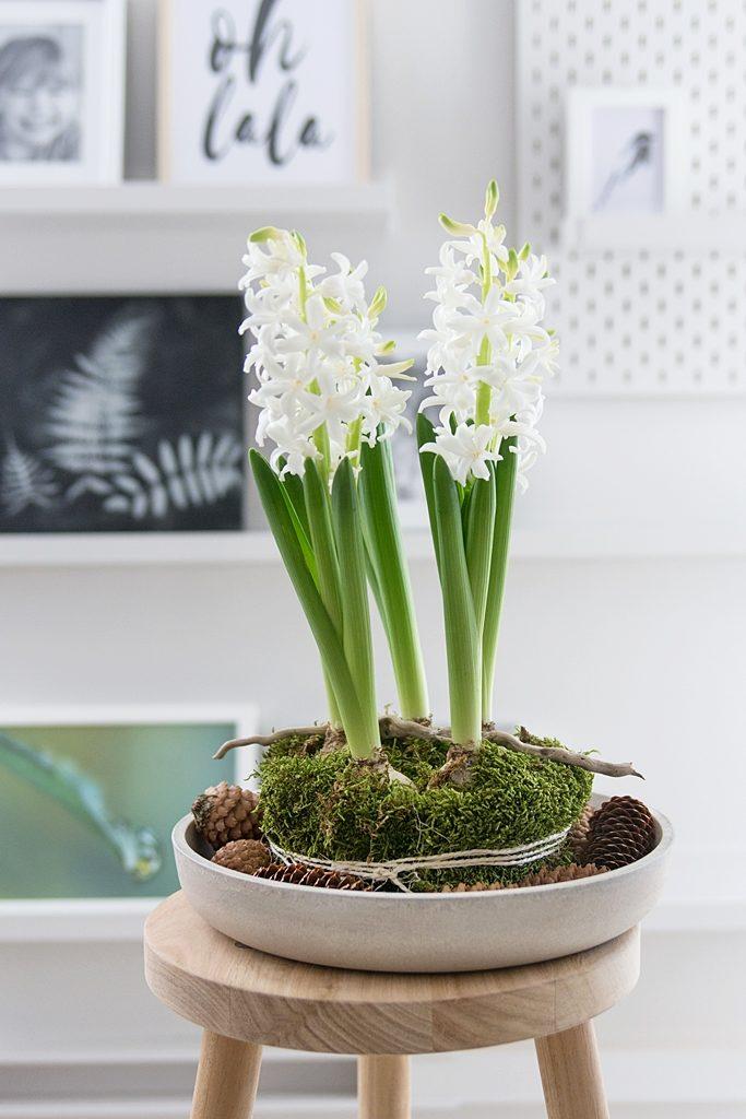 Frühlingsdeko: Hyazinthen im Moos