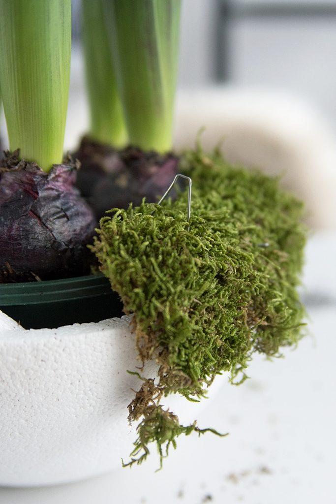 DIY: Einfache Frühlingsdeko mit Hyazinthen, Moos und getrockneten Beeren