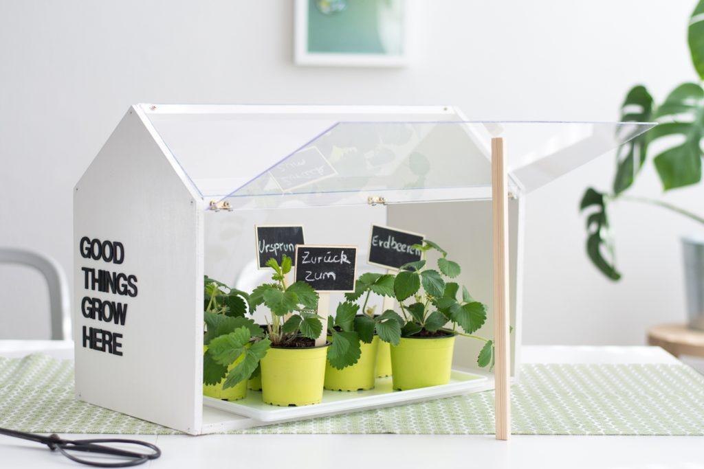 Gastbeitrag für Mein Hofer: DIY Mini-Gewächshaus für die Wohnung