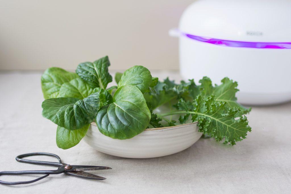 Darf`s ein bisschen grüner sein? 3 x schnelle Rezepte für eine leichte und gesunde Sommerküche #smartgrow