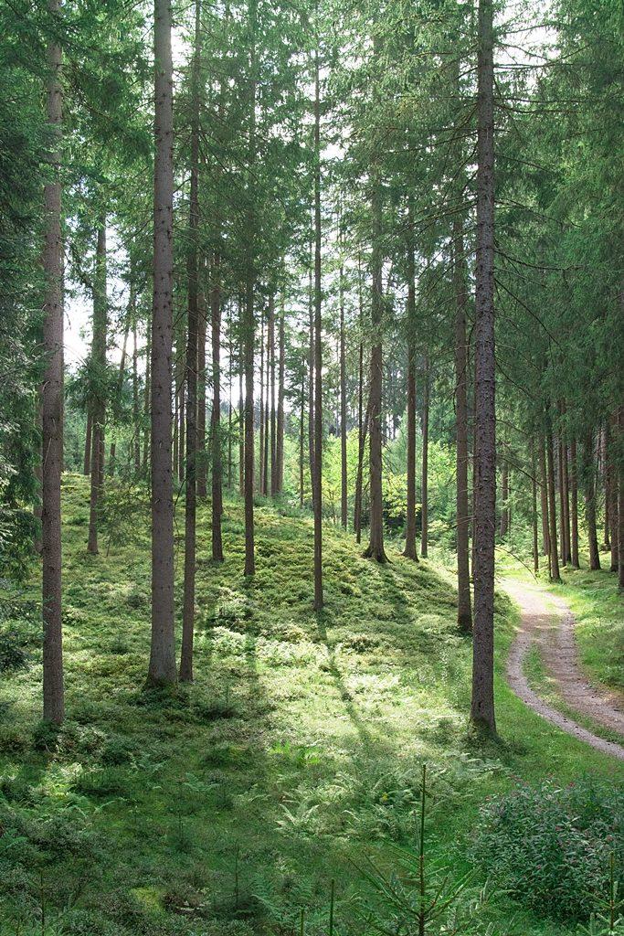 Ein Pflanzenbild für die Ewigkeit: DIY Moosbilder + wie du Waldmoos einfach selber konservierst