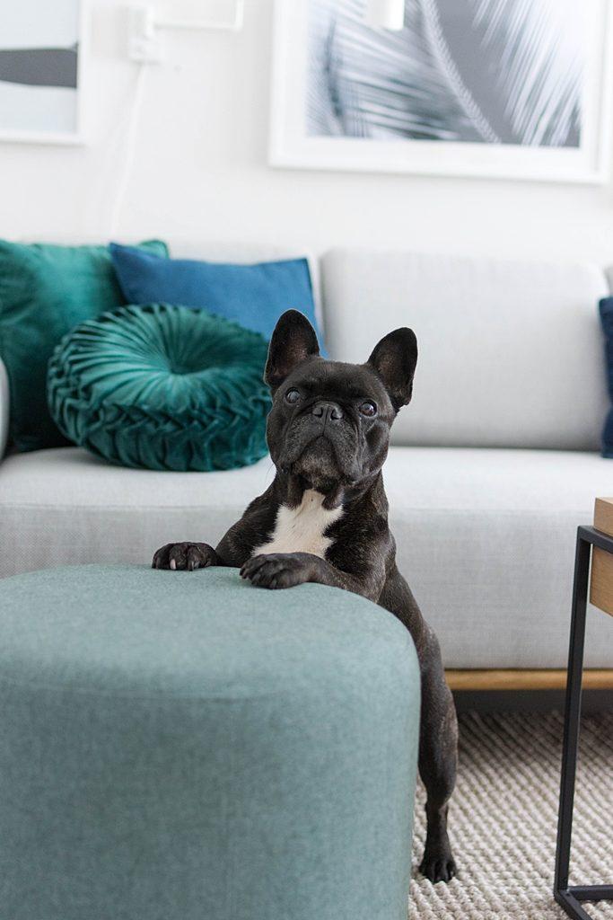 Wir sind SOFAliebt! Unser skandinavisches Design-Sofa ist da! #sofacompany