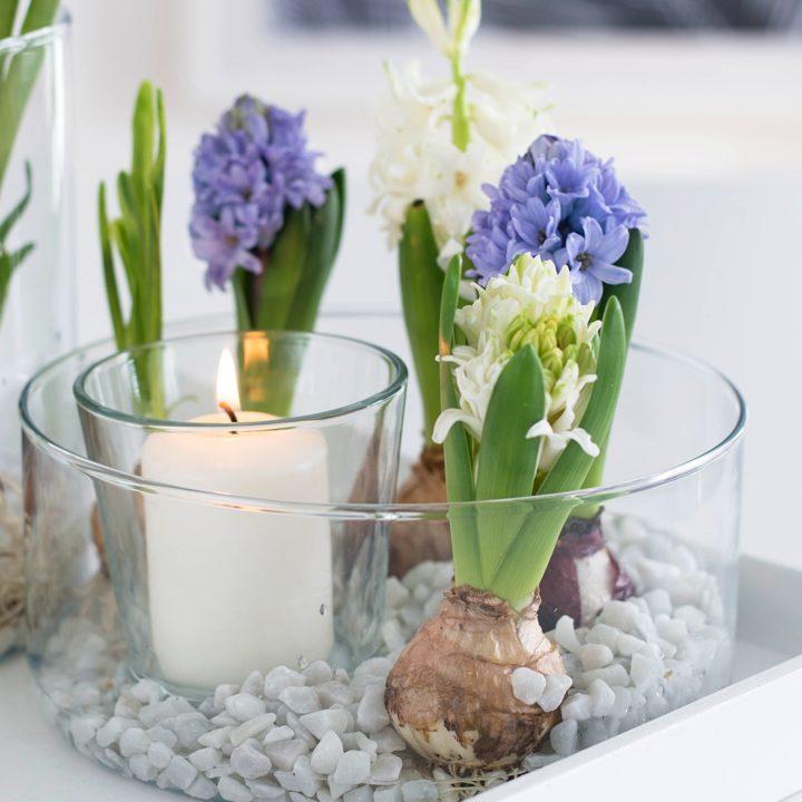 Schnelle Deko-Idee für den Frühling: Duftende Hyazinthen im Glas