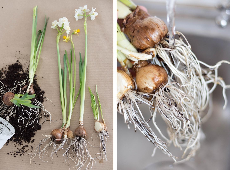 die schnelle Deko-Idee: Frühlingsblumen im Glas