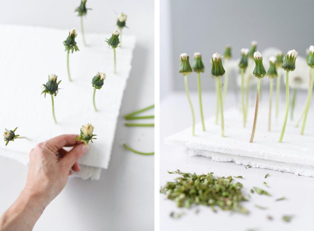 Echte Pusteblumen mit einfachem Trick konservieren + ein Glas voller Wünsche