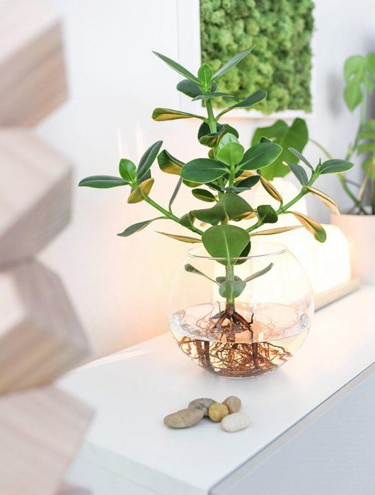 DIY DEKO TREND | Hydroponie – Zimmerpflanzen ohne Erde ins Glas