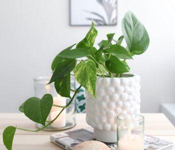 DIY Vase Dotty