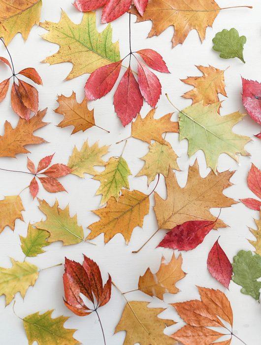 DIY Herbstblätter mit Wachs konservieren