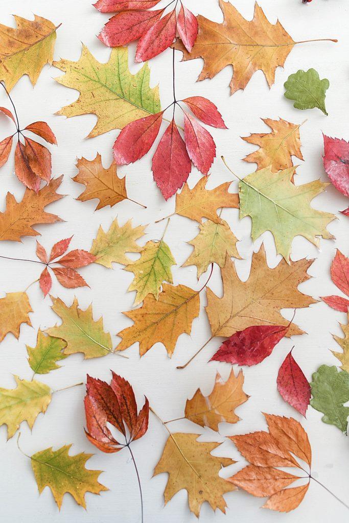 DIY | Bunte Herbstblätter mit geschmolzenem Wachs konservieren