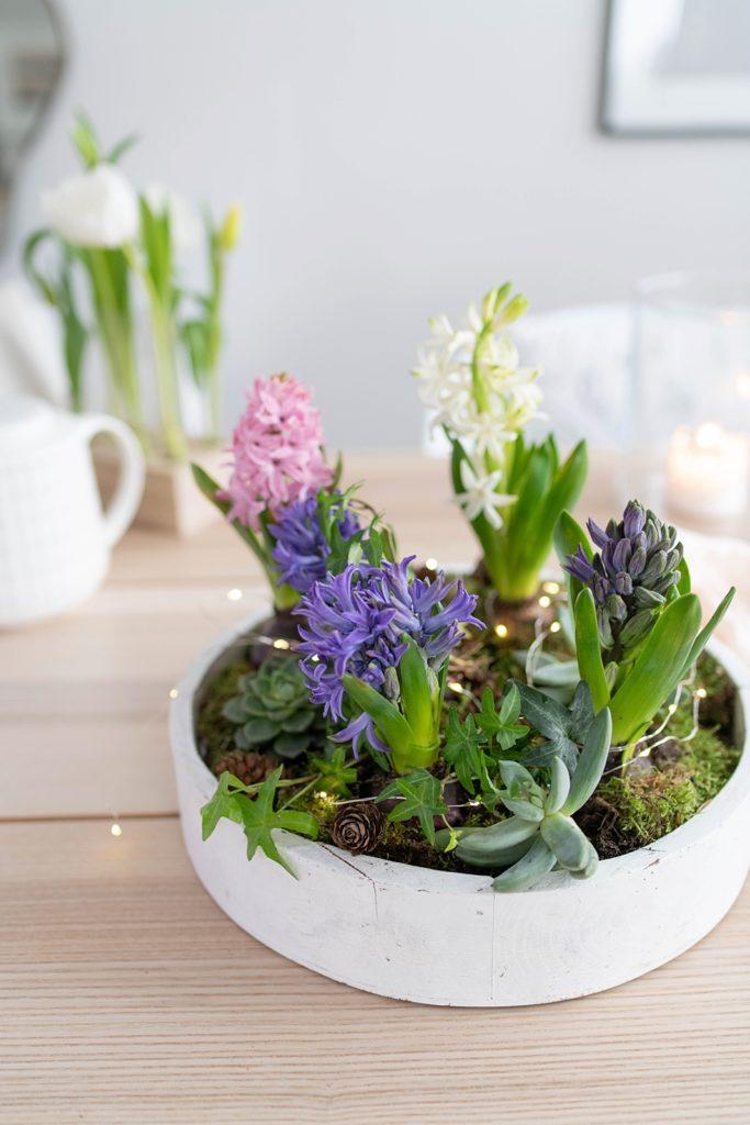 Duftende Deko für den Tisch: Frühlingsschalen mit Hyazinthen und Sukkulenten